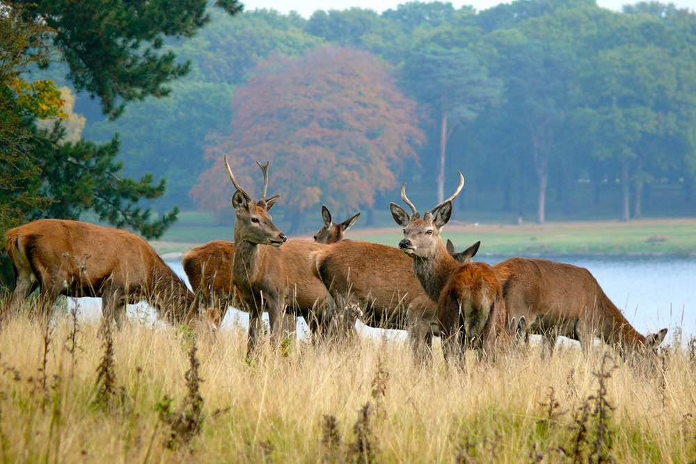 deer-tatton-park-tor-systems-1